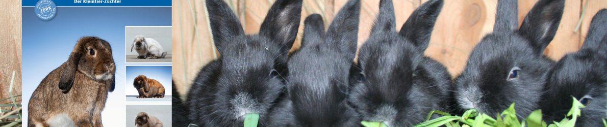 Kaninchenzeitung-Headerbild-Redakteur-Kaninchenzeitung
