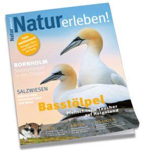 Basstölpel auf der aktuelle Titelseite Natur erlben